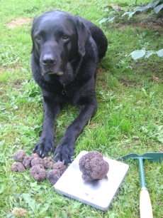 Picture shows a very proud truffle hound with the results of a successful truffle hunt